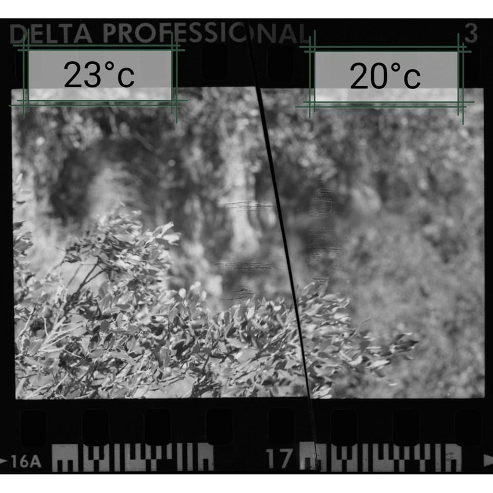 Test de température de développement - révélateur noir et blanc Tmax dev
