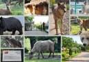 Grădina Zoologică din Pitești este deschisă în perioada 1- 3 mai
