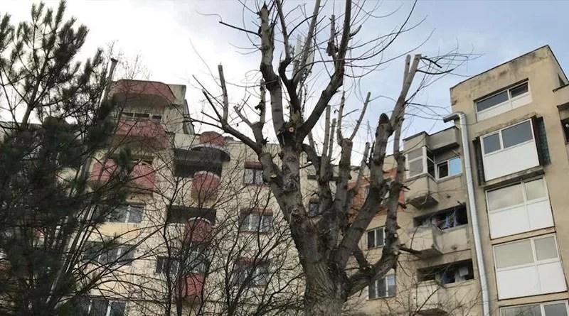 În ce condiții se face toaletarea copacilor din oraș