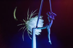 Visual Art - Projection and Acrobatics - Argolla Show