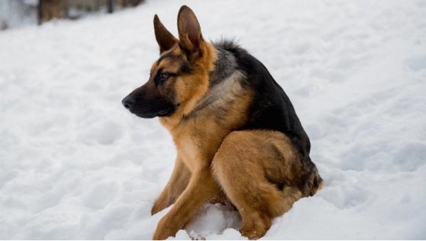 perro cuau.jpg