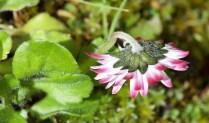 May daisy1