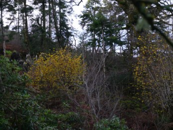 Glowing hazels up the hill