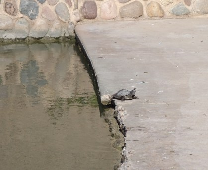 Turtle.