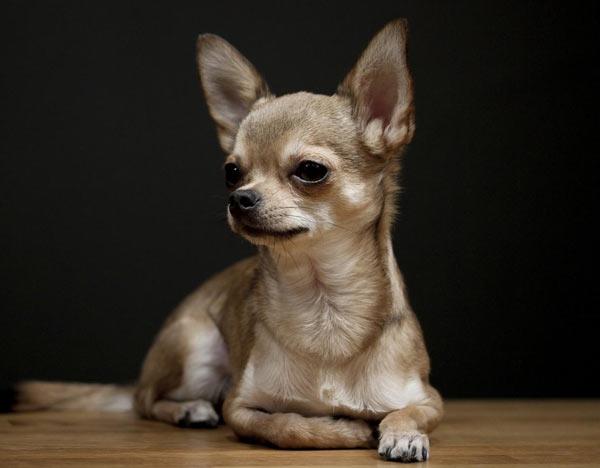 puppies pierde grăsimea catelului)