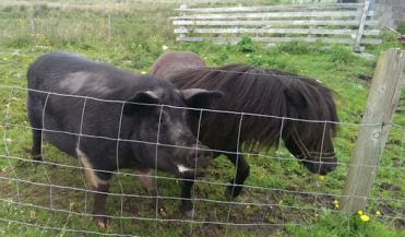 Big Pig & Little Pony