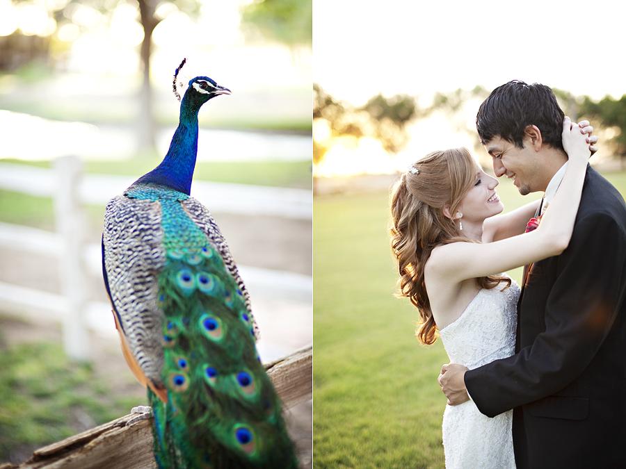 Spirit Ranch Peacock Wedding
