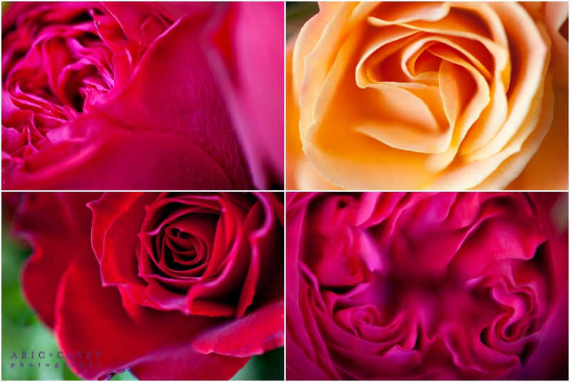 beautiful macro flowers