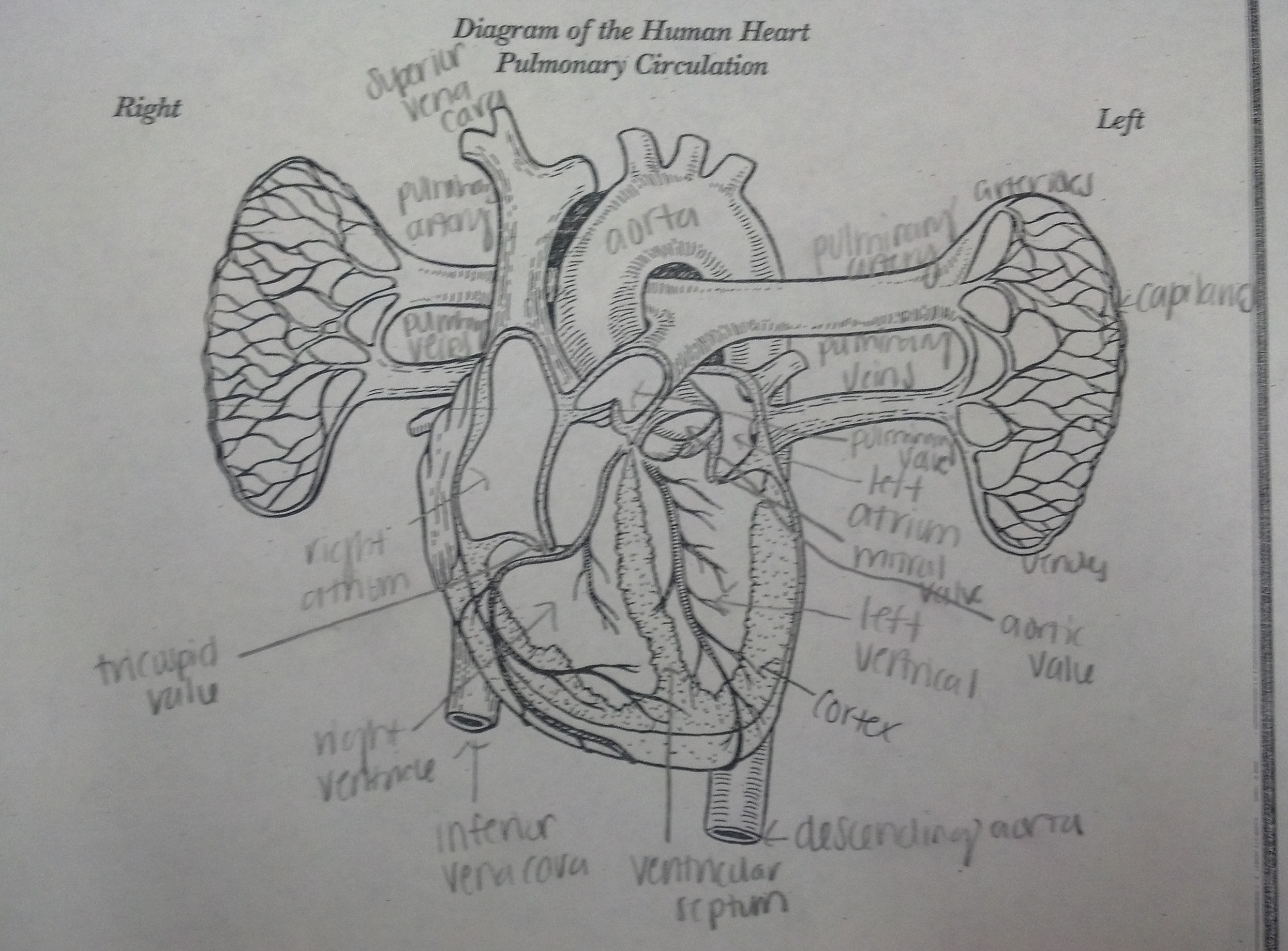 Aricka S Anatomy Blog