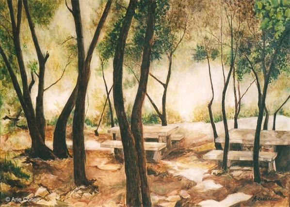 Meron Mountain Forrest • חורשת הר מירון