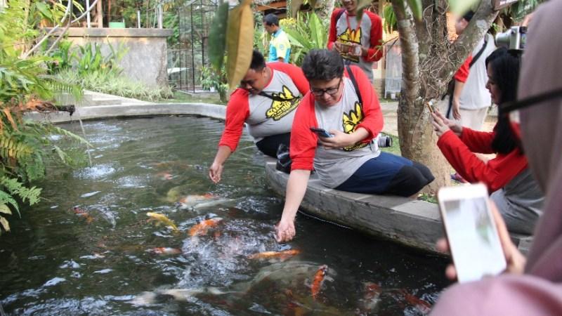 Koi  Taman Botani Sukorambi Ariefpokto