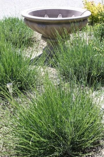 Aulos garden weeded S