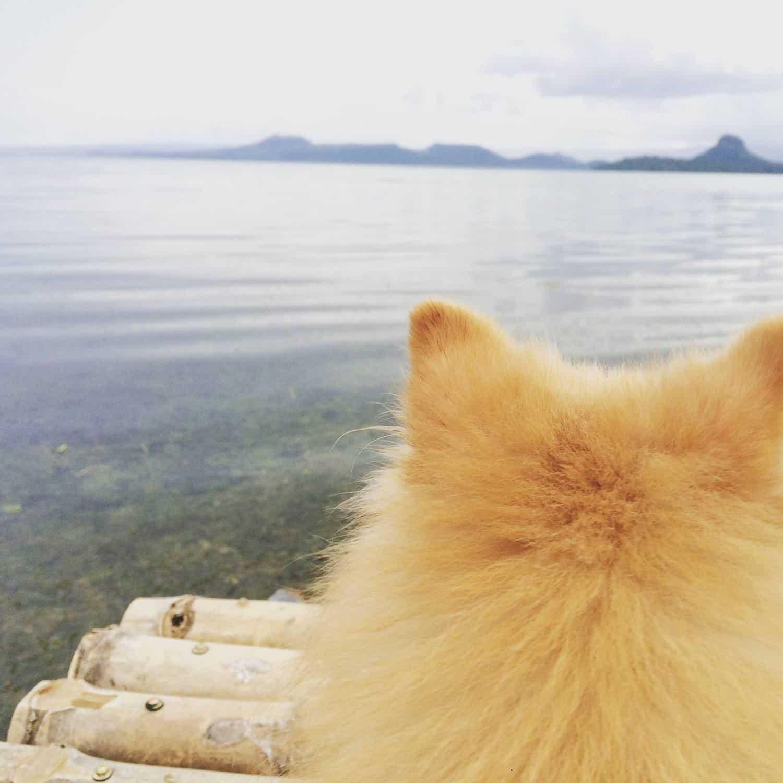 Glitter overlooking Taal lake