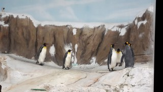 Penguins ^^