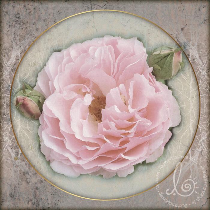 Rose-vintage - Digital-Art