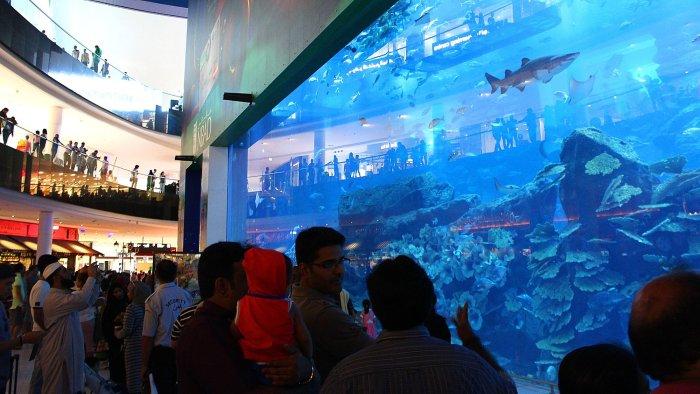 Spectator aquarium window for the Dubai Aquarium and Underwater Zoo in Dubai Mall.