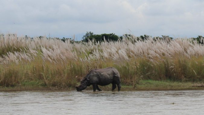 A rhino on the other side of river in Chitwan National Park, Nepal. We spotted some rhinos on the other side of the river.