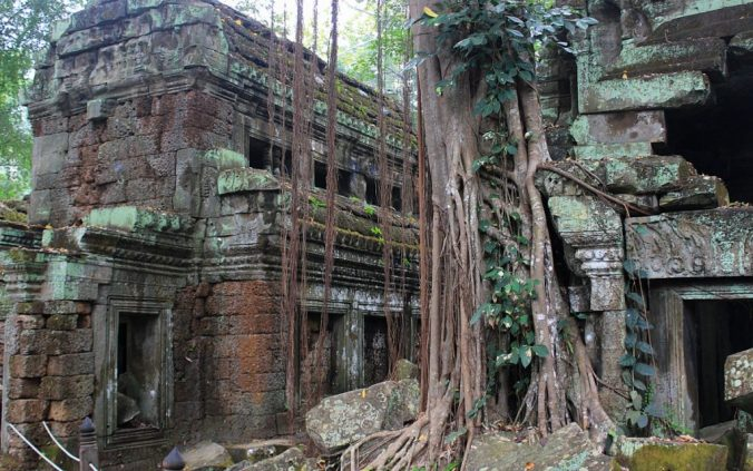 A tree growing through the ruins of Ta Prohm, the temple of Tomb Raider starring Angelina Jolie.