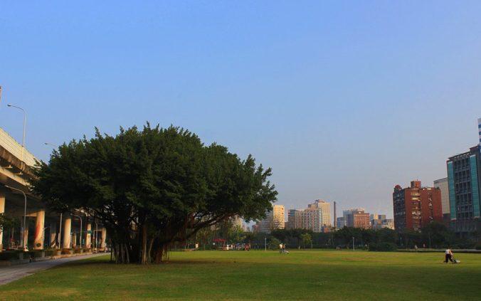 I love Taipei. A big tree near Huashan Park, Taipei.
