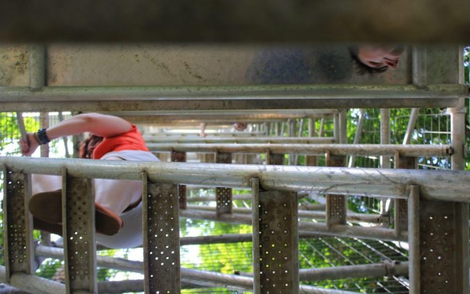 Climbing up to the Canopy Walkway.