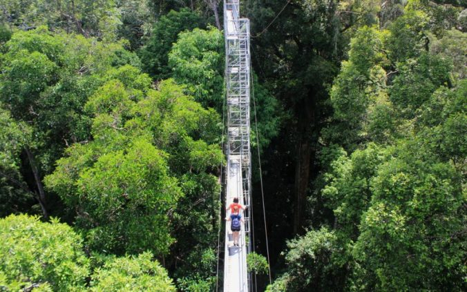 You can see above the treetops from the canopy walk.
