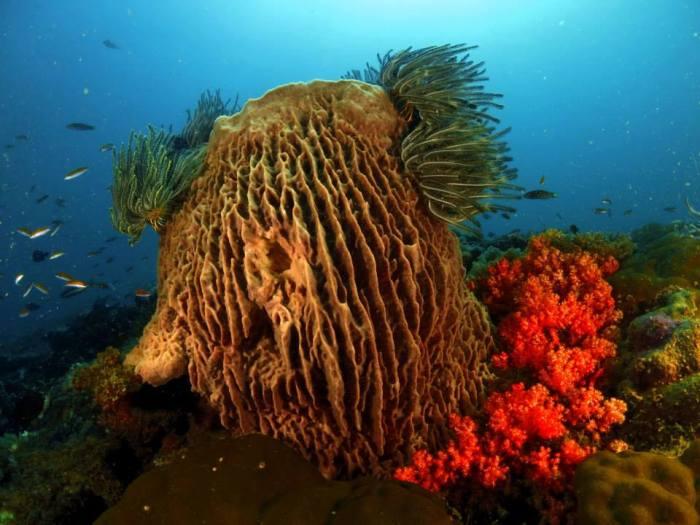 Abana Reef