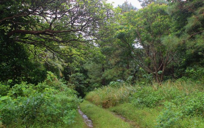 Trekking in Tonga. Most of the hiking paths follow dirt roads.