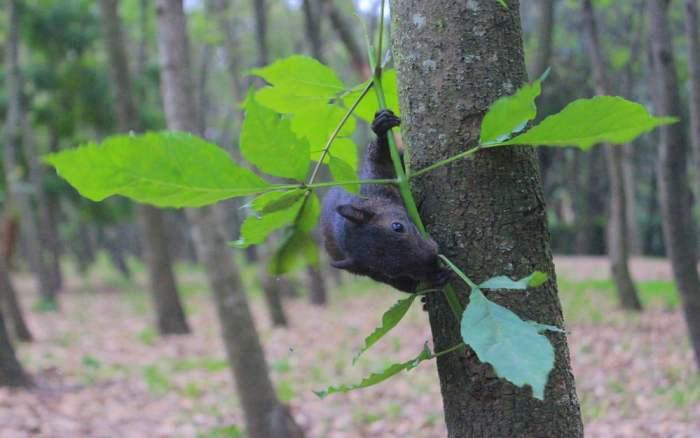 Black squirrel at Viveros de Coyacán Park.