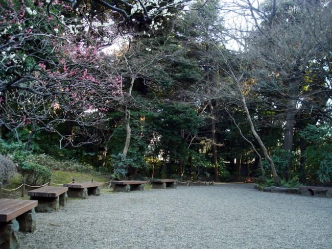ume blossoms, furukawa-tei