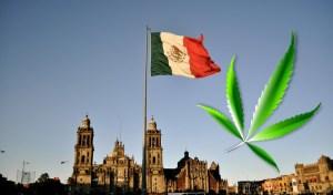 mx cannabis legalization