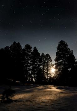 Carly Strauss | Flagstaff
