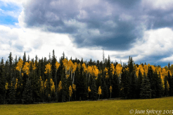 Joan Spivey | Kaibab National Forest