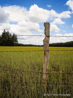 Karin Wilhide | Kinnikinick Lake Road