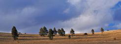 Doug Koepsel | Hart Prairie
