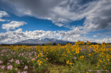Ron Pelton Jr |Flagstaff