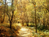 Caitlin Hayden | Oak Creek Canyon
