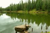 Angela Ramsey Tucker | Woods Canyon Lake