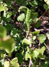 Dancing Snake Nature Photography | Arizona Sonoran Desert Museum