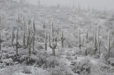 Andrea Ramirez Johnson | Tucson