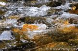 Helen Aguiniga-Grove | Oak Creek