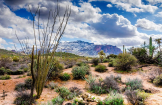Reinier Zorge | Apache Trail
