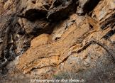 Ron Pelton Jr | Sierra Ancha Wilderness