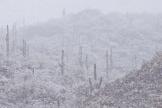 Tim Van Den Berg | Tucson
