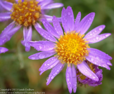Focus On Nature Photography | Jerome