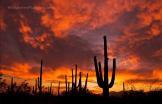 Greg McCown | Saguaro National Park
