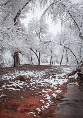 Valerie Millett | Beaver Creek