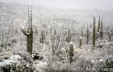 Saija Lehtonen | Tucson