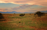 Heavenly Images by Debbie Angel‎ | Sonoita