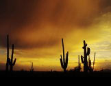 Dave Anderson | Apache Junction