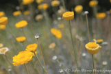 John Morey Photography | Tonto National Forest